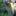 kestrelsparverius
