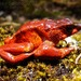 Atelopus carrikeri - Photo (c) beto, all rights reserved, uploaded by Beto_Rueda