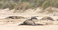 3 adult males resting on beach.