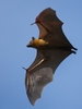 Bats - Photo (c) Isidro Vila Verde, all rights reserved, uploaded by jvverde