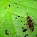 Sawflies - Photo (c) wabbytwax, all rights reserved, uploaded by John Beatty