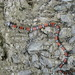 coral snake mimics - Photo (c) c_h_giraldo, all rights reserved, uploaded by César Giraldo