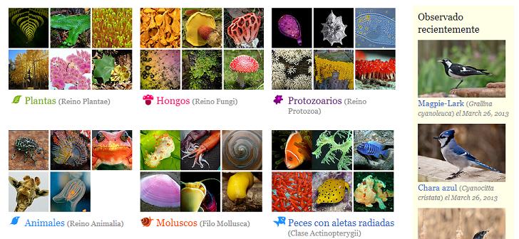 Especies for Nombres de arboles en ingles