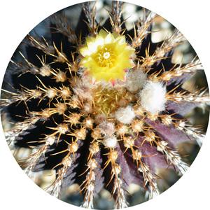 cactus-d