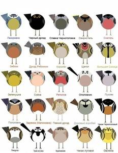 birdstourspb