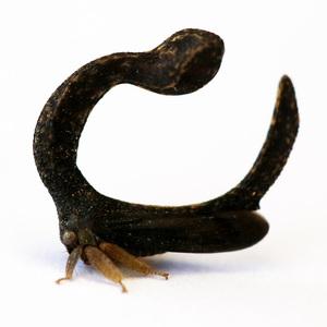 treehoppergo