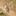 drongo