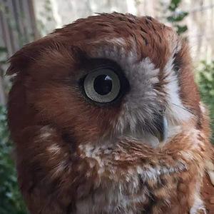owllover