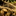 arrowheadspiketail58