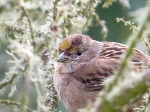 abersbird