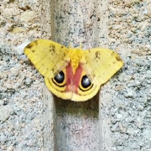 mothlover11