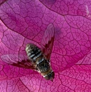 bugs4fun