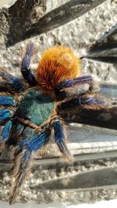 spiderboi1