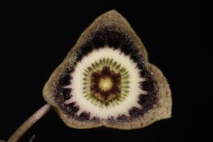 finzelflowers