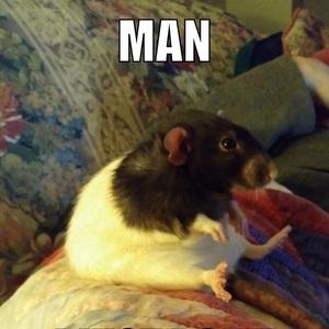 rattman