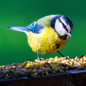 blueybirdy