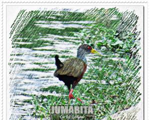 jumabita