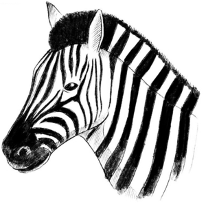 zebra1193
