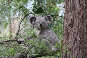 toohey-forest-wildlife