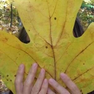 mollyopsis
