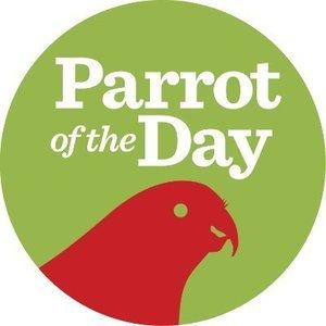 parrotoftheday