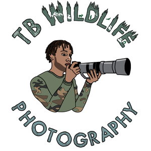 tb_wildlife_photography