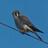 birdwhisperer