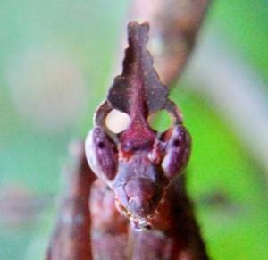 eccentric_entomophile