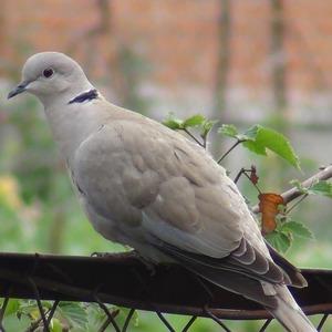 danil_bird