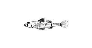 fishmagnt