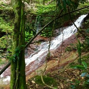 rainforestfolk