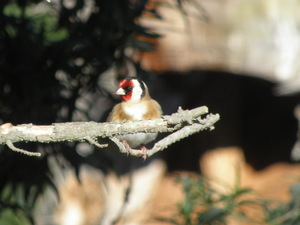 birds_nz