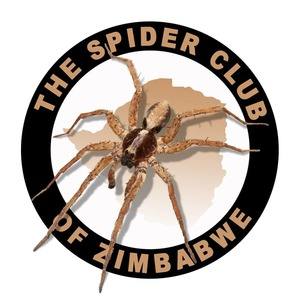 spider_club_of_zimbabwe