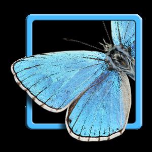 lepidopteramundi