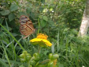 entomoangel