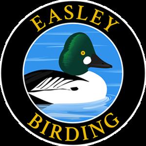 easleybirding