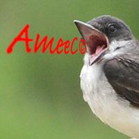 ameec