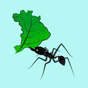 insetosdobrasil