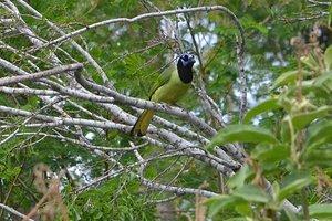 rgvbutterfly