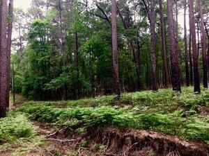 forestcindy