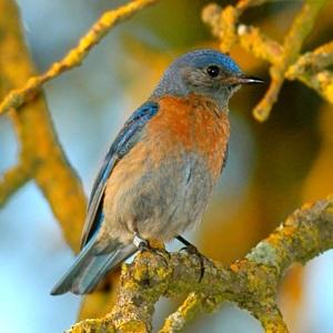 birdgal5