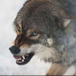 firewolfspirit