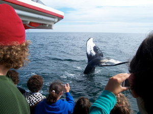 whalecamp