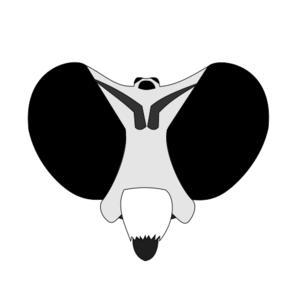 myelaphus