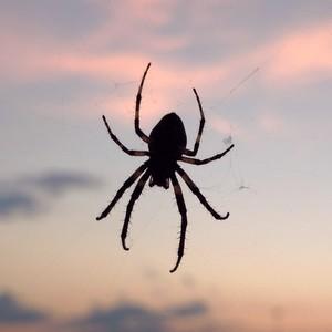 arachnoto