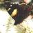 lincolnuni_ecology