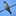 texaskingbird