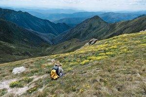 alpine_flora_of_australia