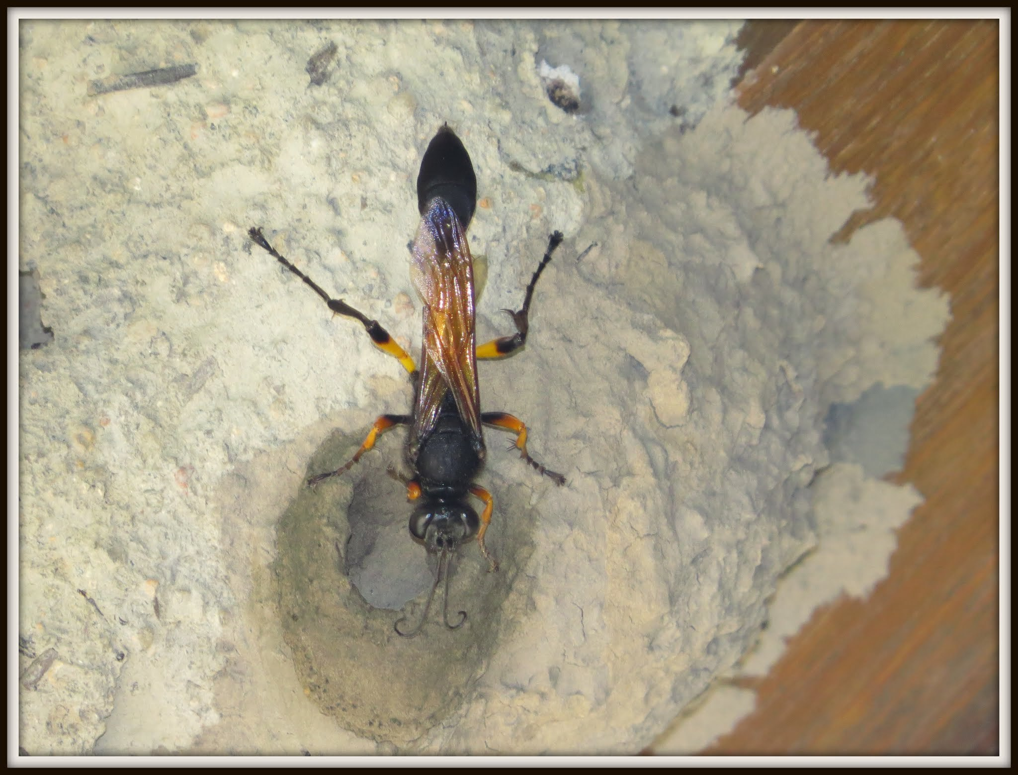Bộ sưu tập côn trùng 2 - Page 6 Original