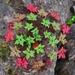 Magnolias, Margaritas Y Parientes (Dicotiledóneas) - Photo (c) KC Kasem, todos los derechos reservados